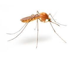 Pest control Mosquito Cambodia